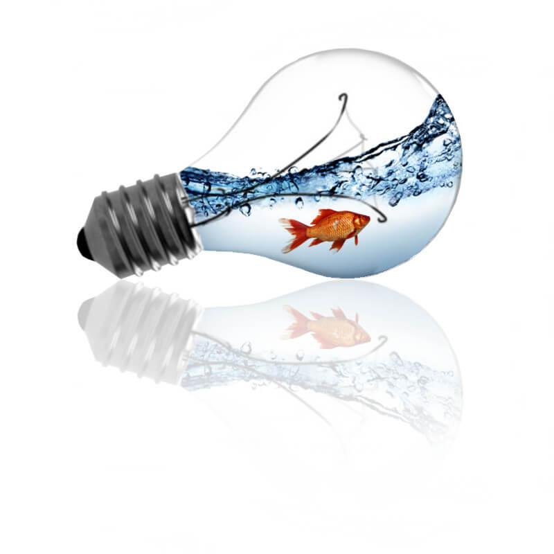 ryba-v-ziarovke